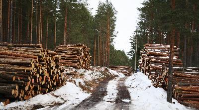 Правильная рубка леса